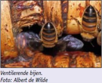 Kasten Isoleren Voor Gezondere Bijen En Drogere Honing