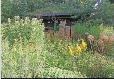 Wilde inheemse planten in de tuin for Tuin beplanten